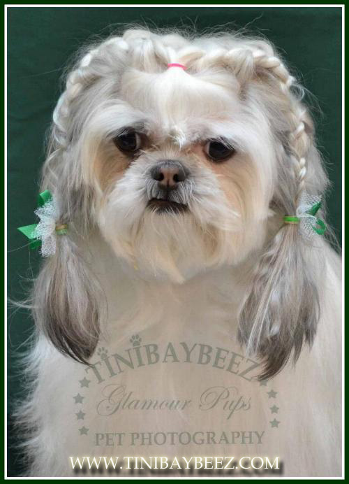 Tinibaybeez Creative Dog Grooming By Tina Nichols In